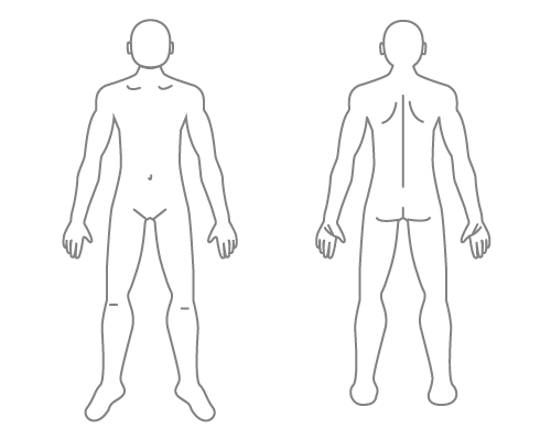 全身の動脈の分布のイラスト - 医療のイラスト・写 …