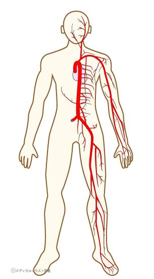 [76] 血管を画像で診る | 血管・血液 | 循環器病あれ …